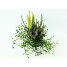 Вереск Calluna vulg. Garden heidemix in sorts c1 h25