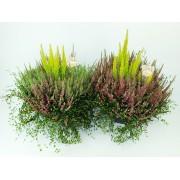 Вереск Calluna vulg. Garden heidemix in sorts p30 h40
