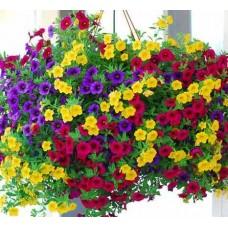 Калибрахоа Фестиваль p13(3 цвета в одном горшке)