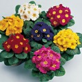 Декоративно-цветущие растения