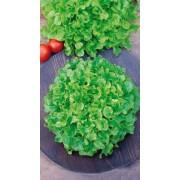 Евро Салат Балконный зелёный