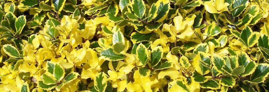 Купить оптом декоративные растения